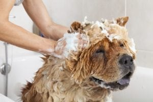 can you use human shampoo on dogs