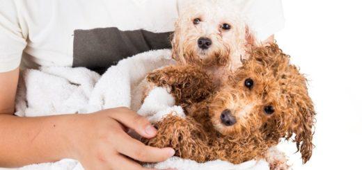best puppy shampoo review