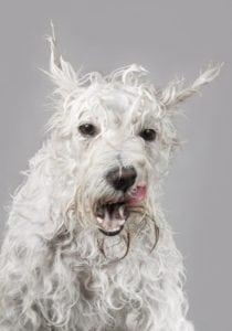 whitening dog shampoo