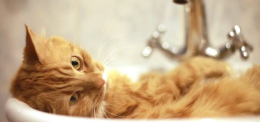 Funny red-haired cat lying in the sink, taking a bath