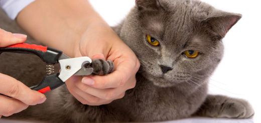 how to trim cats nails