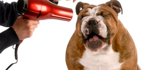 best dog hair dryer