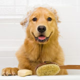 cheap dog shampoo