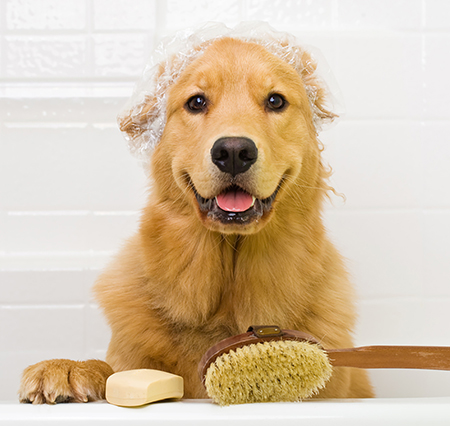 cheap dog shampoo