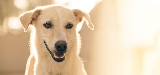 dog lose baby teeth