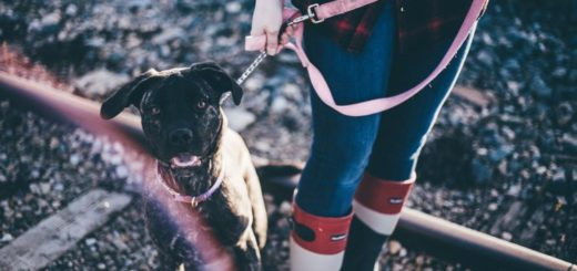 dog one a leash