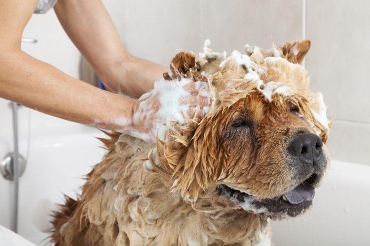Can I Use Cat Shampoo On A Dog
