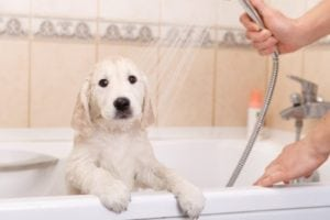 puppy in a bath
