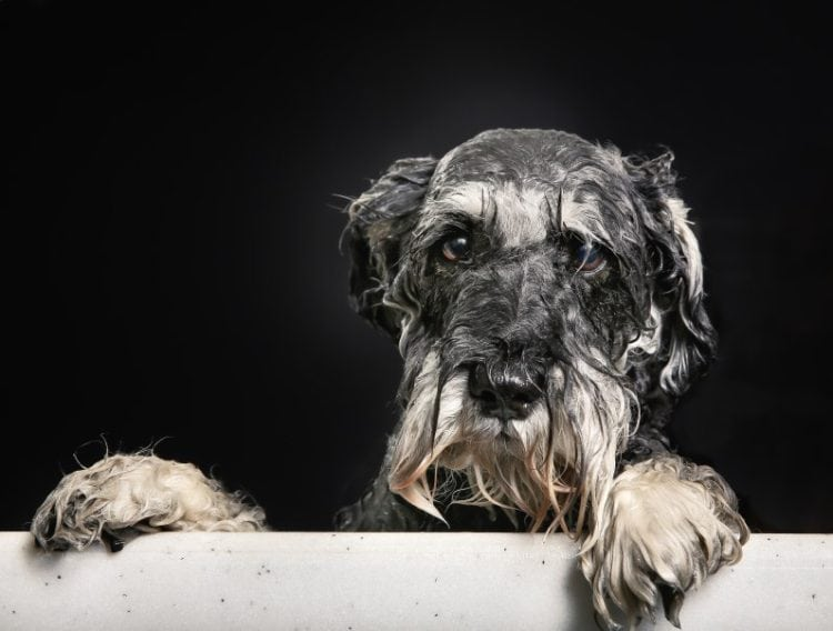 Why Do Dogs Hate Baths What To Do When Your Dog Hates Baths