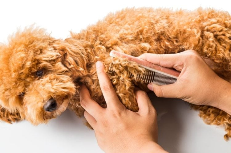 dog being brushed