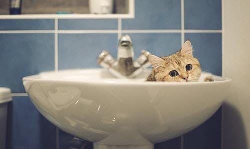 can you bathe a kitten?