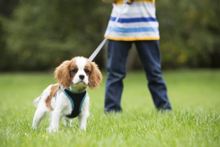 best no pull dog harness