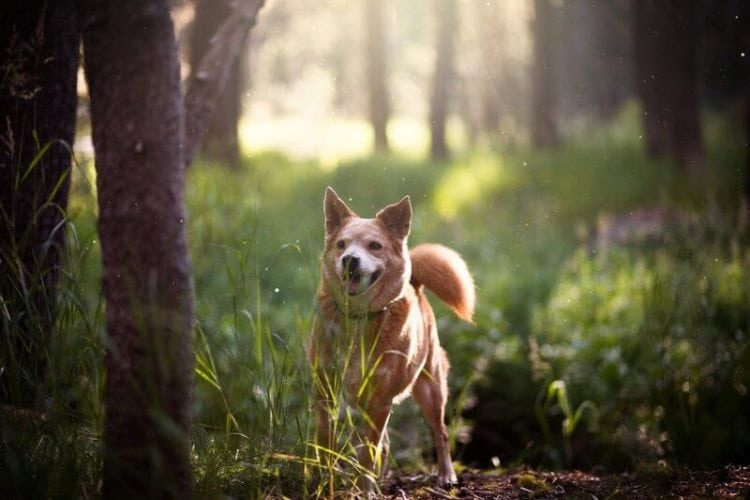 benefits of a grain free dog food diet