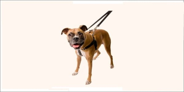 Freedom No Pull Dog Harness