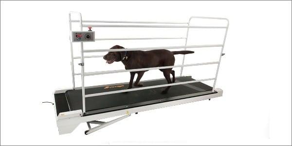 GoPet Petrun dog treadmill
