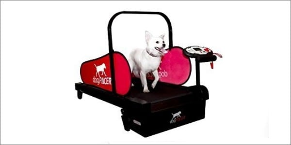 dogPACER Folding Pet Treadmill