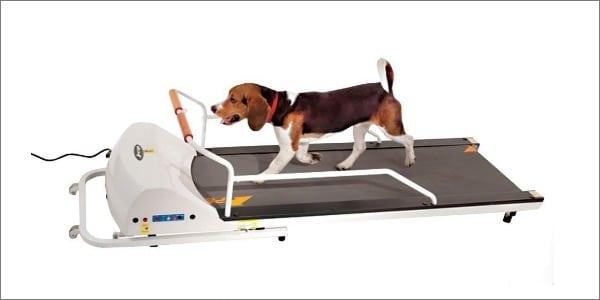 GoPet Treadmill