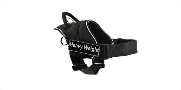 DT dog harness