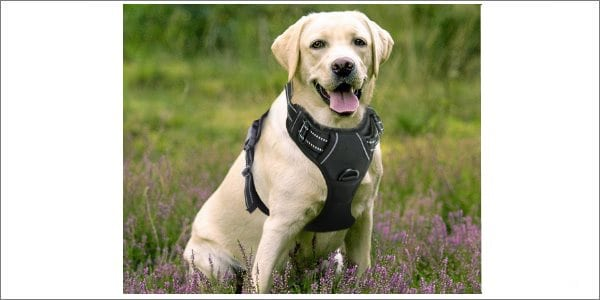 Rabbitgoo Pet Harness