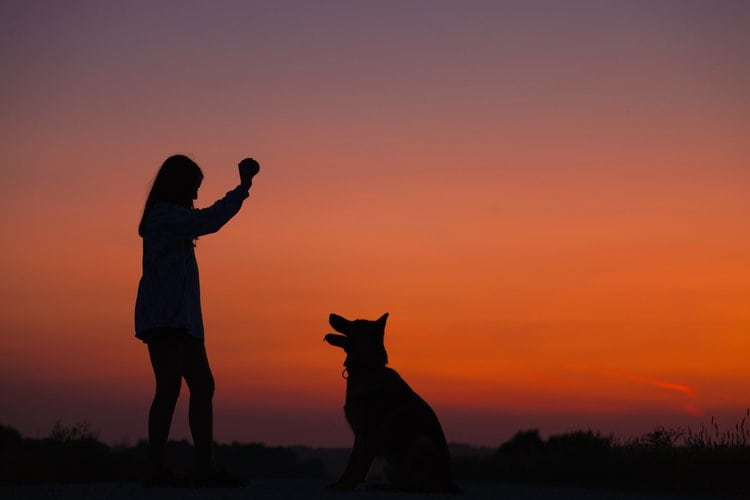sunset with dog
