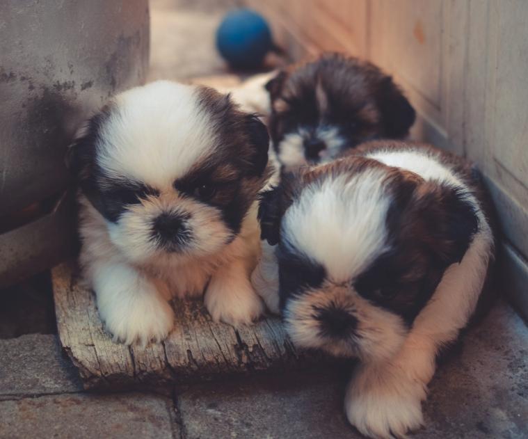 best puppies food
